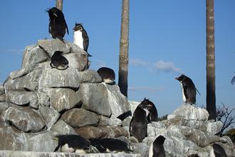 油壺マリンパーク「ペンギン島」の画像です。