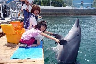 大分県津久見市の返礼品 イルカと泳ごうの画像