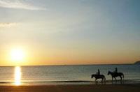 究極の癒し 波音を聞きながら乗馬体験(寄付金額 30,000円)へのリンク