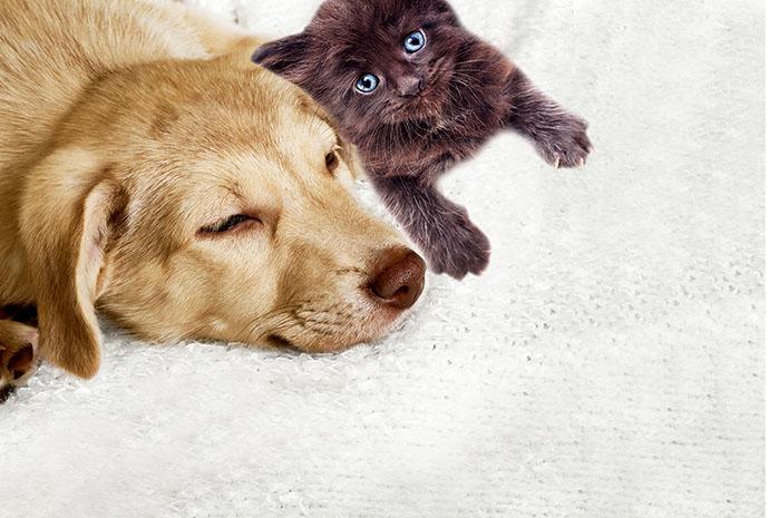 にゃんにゃんにゃんの日に考える ふるさと納税で犬猫を守ること