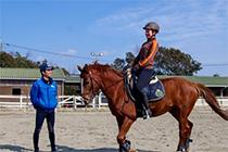明石乗馬協会イメージ